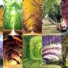 10 Найкрасивіших тунелів з дерев в світі