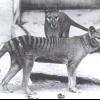 10 Видів тварин, винищених людиною