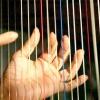 А ви знаєте, з чого роблять струни?