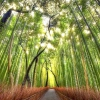 Бамбуковий ліс сага