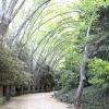 Ботанічний сад малаги