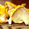 Десятка найкращих лісових грибів