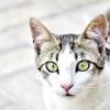 Факти про кішок. 2 частина