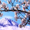 Гора Фудзі стане платною