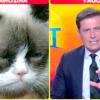 Сумна кішка (grumpy cat) розсмішила ведучого