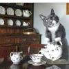 Ідеальний кіт вміє мити посуд і прибирати в будинку