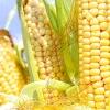 Іспанська кукурудзяна дієта