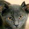 Історія котика з чотирма вухами