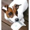 Італійці купують собак в кредит