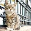 Ермітаж роздає своїх знаменитих котів