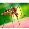 Як позбутися від комариних укусів