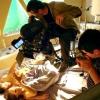 Як знімаються постільні сцени у фільмах