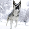 Як собаки знаходять дорогу додому?