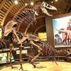 Як злучалися динозаври