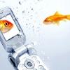 Як врятувати телефон, якщо він впав у воду