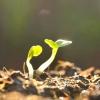 Як дізнатися тип ґрунту, і навіщо це потрібно