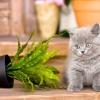 Як захистити кімнатні рослини від домашніх тварин