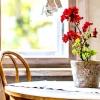 Які кімнатні квіти негативно впливають на людину?