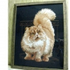 Кішки - чарівність моє!