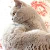 Кішку продали разом з будинком