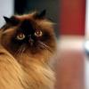 Кіт напав на господарів і замкнув їх у спальні