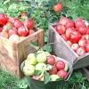 Куди подіти яблука