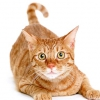 Ласощі для кішок