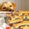 Ласощі для собак
