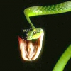 Маринована змія вкусила китаянку