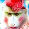 Мексика проти використання диких тварин у цирку
