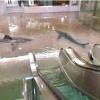 Мене трохи не затопило в метро
