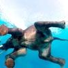 Світ дикої природи очима: Стівен Блум
