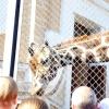 Московський зоопарк попросив приносити жолуді для мавп