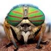Комахи з «виряченими» очима