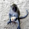 Мавпяча стежка