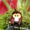 Орхідея з мавпячої мордочкою