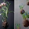 Оригінальні квіткові композиції від федора ван дер валька