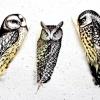 Оригінальні малюнки на пташиних пір'ї