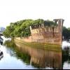 Плаваючий мангровий ліс