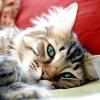 Плюси і мінуси стерилізованих собак і кішок