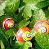 Поліміти - розфарбовані равлики