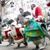 Різдвяний парад пінгвінів