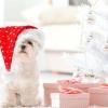 Різдво у світі тварин