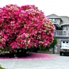 Найкрасивіші дерева в світі