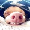 Найпопулярніші тварини в instagram