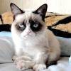 Сердита кішка зробила господиню багатою