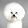 Тім флеч і його портрети собак