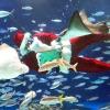 В Японії з'явився різдвяний акваріум