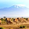 У кенії можна буде спостерігати міграцію слонів