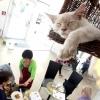 У париже відкрилося кафе для любителів кішок
